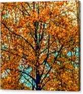 Solitary Fall Canvas Print