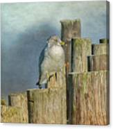 Solitary Gull Canvas Print