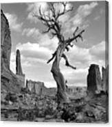 Solitary Park Avenue Tree - Bw Canvas Print