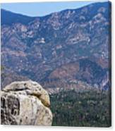 Solitary Pine On Promontory Canvas Print