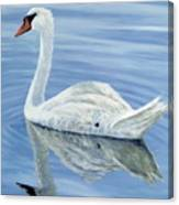Solitary Swan Canvas Print