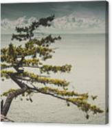 Solitary Tree Canvas Print