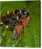 Solitary Wasp Canvas Print