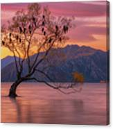 Solitary Willow Tree Canvas Print