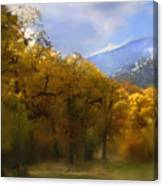 Solitude In Gold Canvas Print