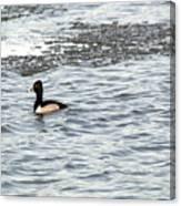 Solo Duck Canvas Print