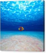Solo Under The Sea Canvas Print