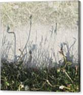Some Peoples Weeds Canvas Print