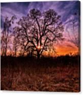 Somenos Oak Canvas Print