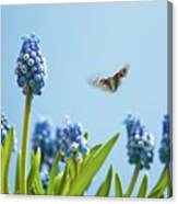 Something In The Air: Peacock Canvas Print