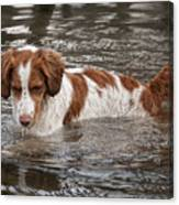 Something Under The Water Canvas Print