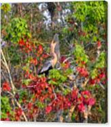 Song Of The Anhinga Canvas Print