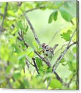 Song Sparrow With Dinner Canvas Print