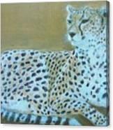 Sonia The Cheetah II Canvas Print