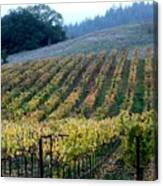 Sonoma County Vineyards Near Healdsburg Canvas Print