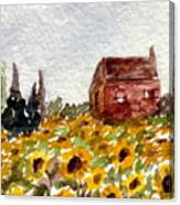 Sonoma Hillside Series Sunflowers Canvas Print