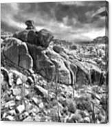 Sonora Desert Canvas Print