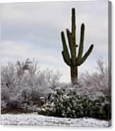 Sonora Desert Winter Canvas Print