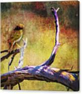 Sonoran Desert Dreamscape Canvas Print