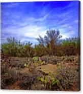 Sonoran Desert H1819 Canvas Print