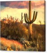 Sonoran Desert Morn Canvas Print