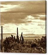 Sonoran Desert Mountains And Cactus Near Phoenix Canvas Print