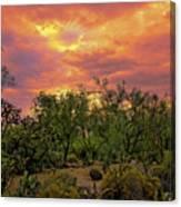 Sonoran Desert Sunset H44 Canvas Print