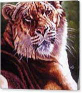 Sophie The Liger Canvas Print