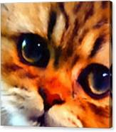 Soulfull Eyes Kitten Portrait Canvas Print