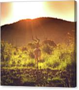South Africa At Its Finest  Canvas Print
