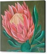 South Africa Protea Canvas Print