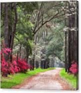 South Carolina Lowcountry Spring Flowers Dirt Road Edisto Island Sc Canvas Print
