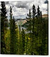 South Lake Through The Pines Canvas Print