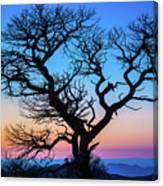 South Rim Tree Canvas Print