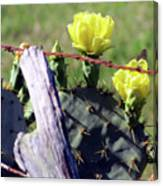 South Texas Fence Canvas Print