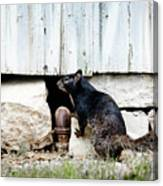 South Texas Squirrel Canvas Print