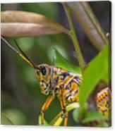 Southeastern Lubber Grasshopper Canvas Print