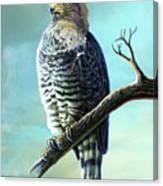 Southern Banded Snake Eagle Canvas Print
