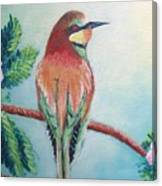 Southern Bee-eater Canvas Print