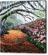 Southern Charm Oak And Azalea Canvas Print