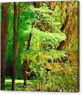 Southern Forest Canvas Print