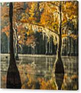 Southern Gold Canvas Print