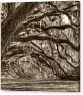 Southern Live Oak Trees Canvas Print