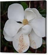 Southern Magnolia Matchsticks Canvas Print