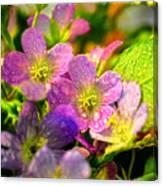 Southern Missouri Wildflowers 1 Canvas Print