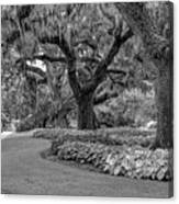 Southern Oaks In Black And White Canvas Print