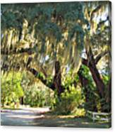 Southern Pathway Canvas Print