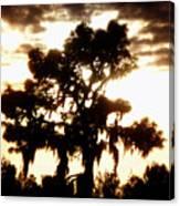 Southern Pine Canvas Print