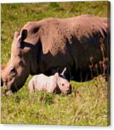 Southern White Rhino With A Little One Canvas Print