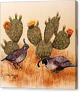 Southwest Art Gambels Quail Canvas Print
